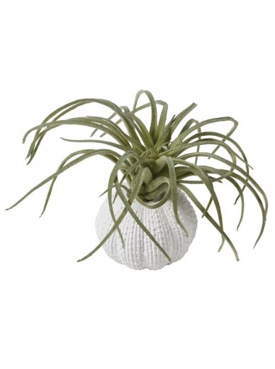 Green Tillandsia in Faux Urchin Pot