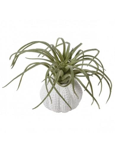Green Tillandsia in Faux Urchin Pot