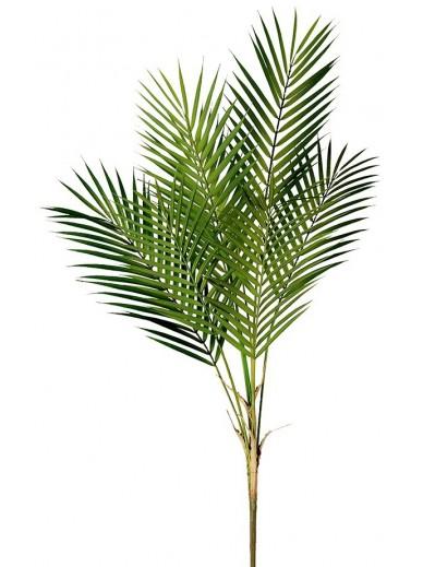 Green Palm Leaf Bush Stem