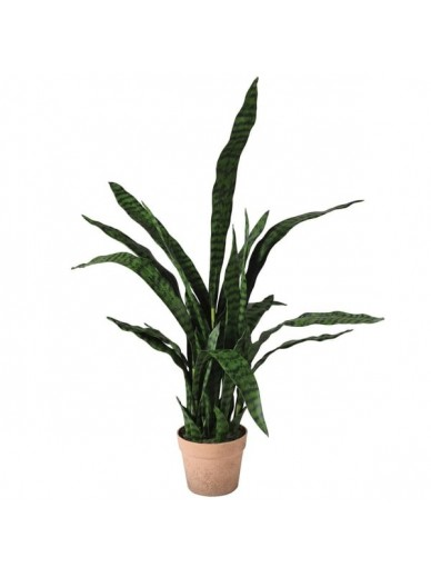 SOLD OUT Sanseriveria Plant in Pot