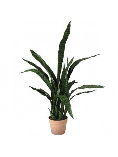 Sanseriveria Plant in Pot