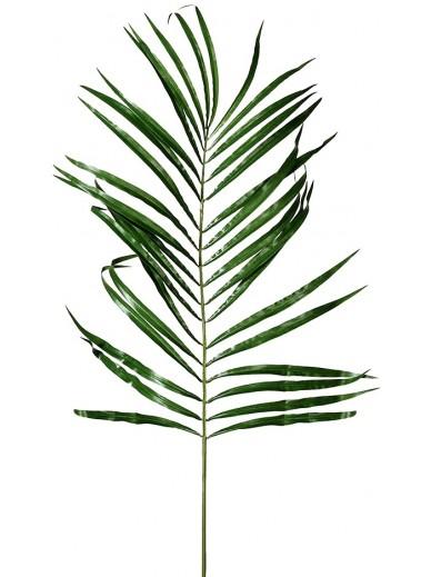 Green Areca Palm Leaf